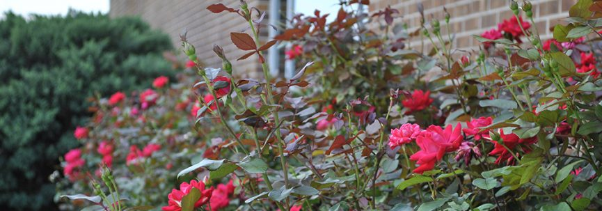 a photo of the flowers outside of the health sciences building
